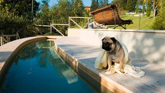Con il cane al Resort dog friendly
