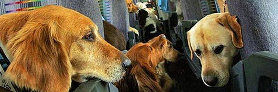 cani a bordo di un aereo