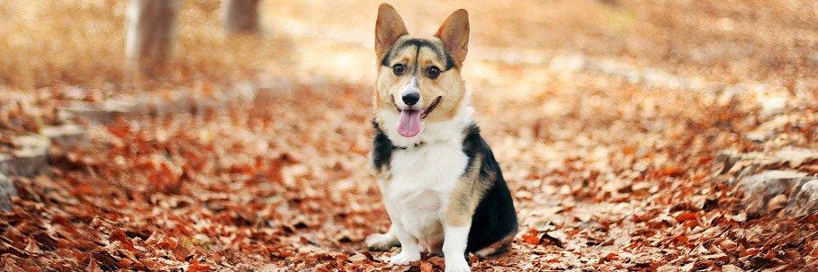 vacanza-con-un-cane-in-carinzia