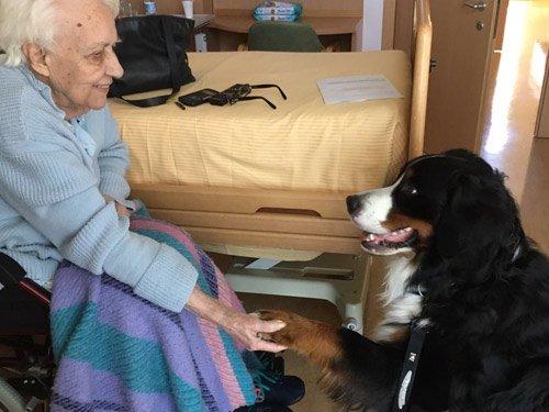 cane-da-pet-therapy-argo