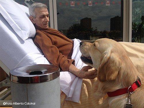 cane-da-pet-therapy-charlie