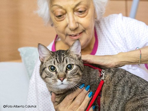 gatto-da-pet-therapy-barone