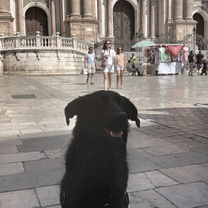 Alla Cattedrale di Malaga