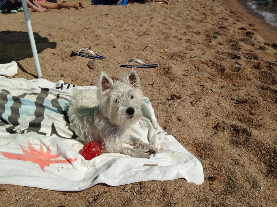 Vacanze con il cane in corsica