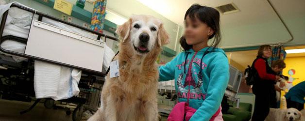 ospedale-fatebenefratelli-cani