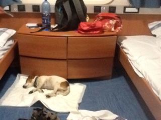 Vacanze con il cane in nave