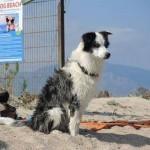 vicky-spiaggia-per-cani-sardegna