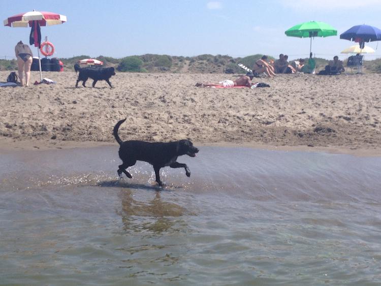 spiaggia libera per cani